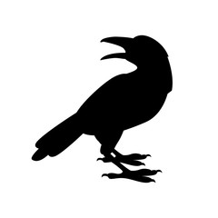Crow vector illustration  black silhouette