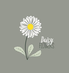 Meadow floral background