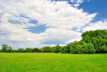 Spring meadow with green grass under a blue sky