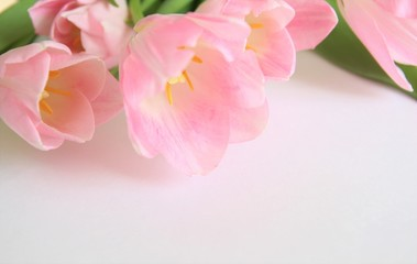 Bouquet of pink tulips. Blossom. Flowers