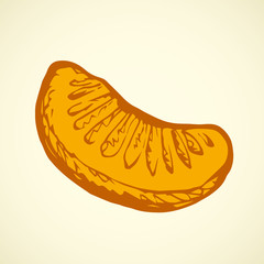 Orange lobule. Vector drawing