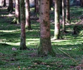 Wald mit Moos und Bäumen