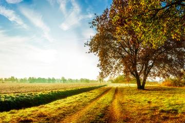Herbstliche Landschaft mit Feldweg und Eiche