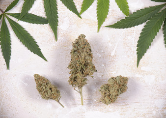 Cannabis buds with pot leaves over white - Medical marijuana background