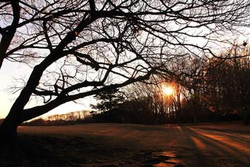 冬の大木と夕日