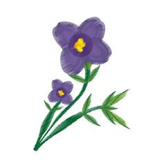 drawing african violet flower ornament vector illustration eps 10