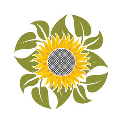 illustration with flower of sunflower and leaves
