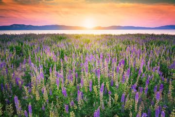 Obraz Wildflowers field at sunset - fototapety do salonu