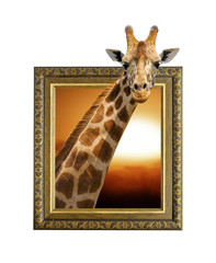 Giraffe in frame with 3d effect