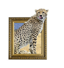 Cheetah in frame with 3d effect