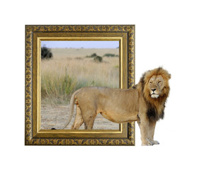 Lion in frame with 3d effect