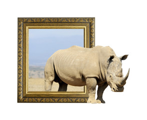 Rhino in frame with 3d effect