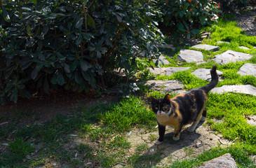 Colorful domestic cat in garden