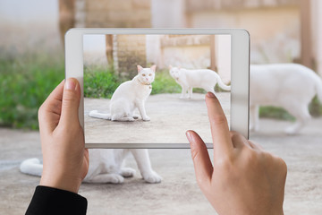 ipad take photo cute white cat sitting