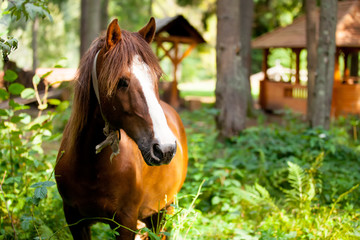 photo of beautiful adult horse standing on the wonderful village background