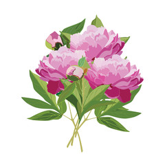 Vector flat illustration of bouquet of peony flowers