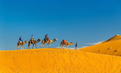 Tourists riding camels at Erg Chebbi near Merzouga in Morocco