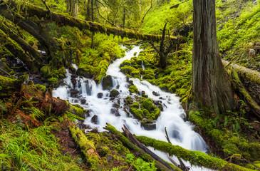 Cascade waterfalls in Oregon forest hike trail