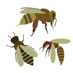 Set of bee, wasp in cartoon style