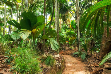 Rain forest of Valee de Mai