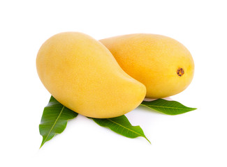 King of fruits;  yellow Mango fruit duo isolated on white background