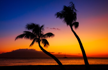 Wall Mural - two palm trees and sunset