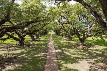 Oak Alley Plantation Park
