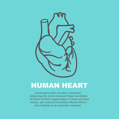 Human heart on a medical blue background.