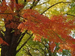 紅葉した木