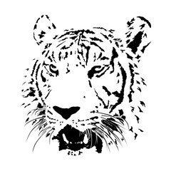 black and white bengal tiger, isolated animal face vector illustration, wildlife tattoo