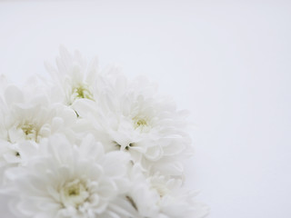 White background with white flowers.