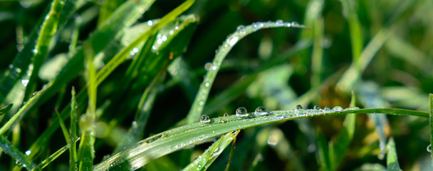 Wassertropfen auf Grass im Frühling und Sommer