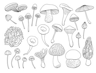 Collection of various hand drawn mushrooms. Elements for design.