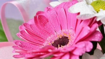 Beautiful colorful daisy flowers.Gerbera. Spring background - garden.