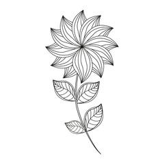 dahlia flower decoration line vector illusrtation eps 10