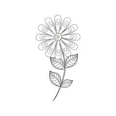 daisy flower decoration line vector illustration eps 10
