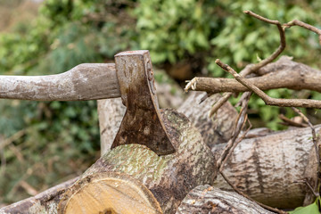 einen Baum fällen Axt im Holzstamm Arbeit