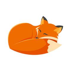 Vector cartoon style illustration of sleeping fox.