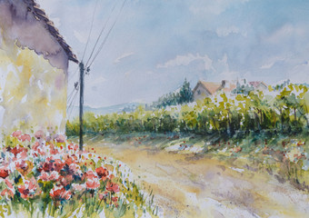 Poppy flowers close to the country road.Picture created with watercolors.