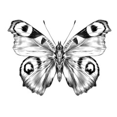 butterfly with open wings top view, the symmetrical drawing, graphics sketch vector black and white drawing