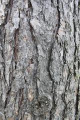 Bark 1