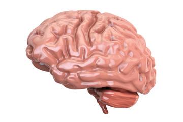 Human Brain, 3D rendering