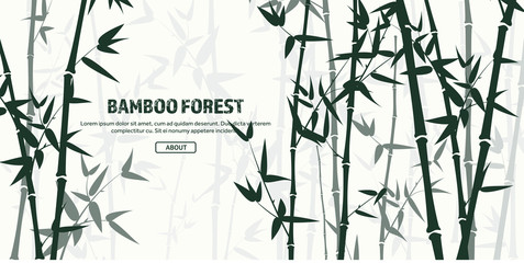 Bamboo forest set. Nature. Japan., China. Plant. Green tree with leaves. Rainforest in Asia.