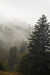Evergreens, Autumn, Great Smoky Mountains NP