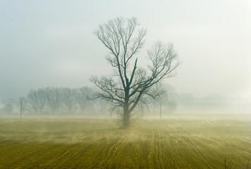 Stare samotne drzewo