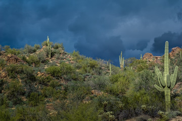 Before the Storm in the Tonto National Forest