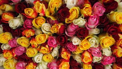 In de dag Roses roses en bouquet