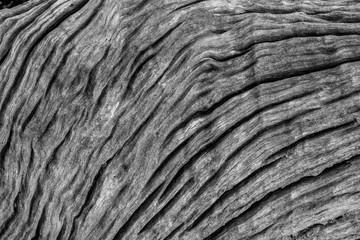 Tree Bark Black & White