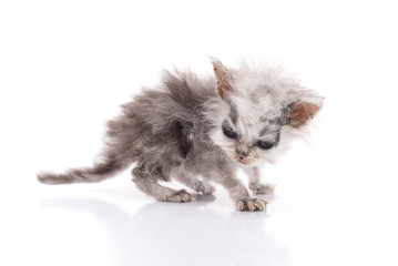 Sick kitten on white background
