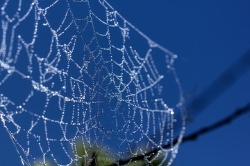 Drops of dew on a web. Morning meadow.